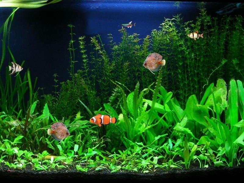 Screenshot   Aquarium Fish Screensaver   Nature Screen Savers 800x600
