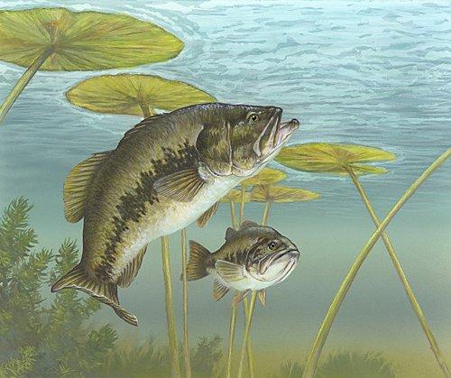bass fish 500x419