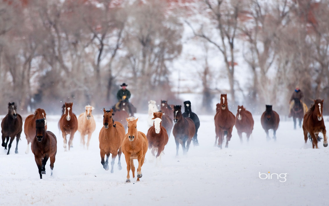Winter Horses Bing Wallpaper by Phebomenon 1131x707