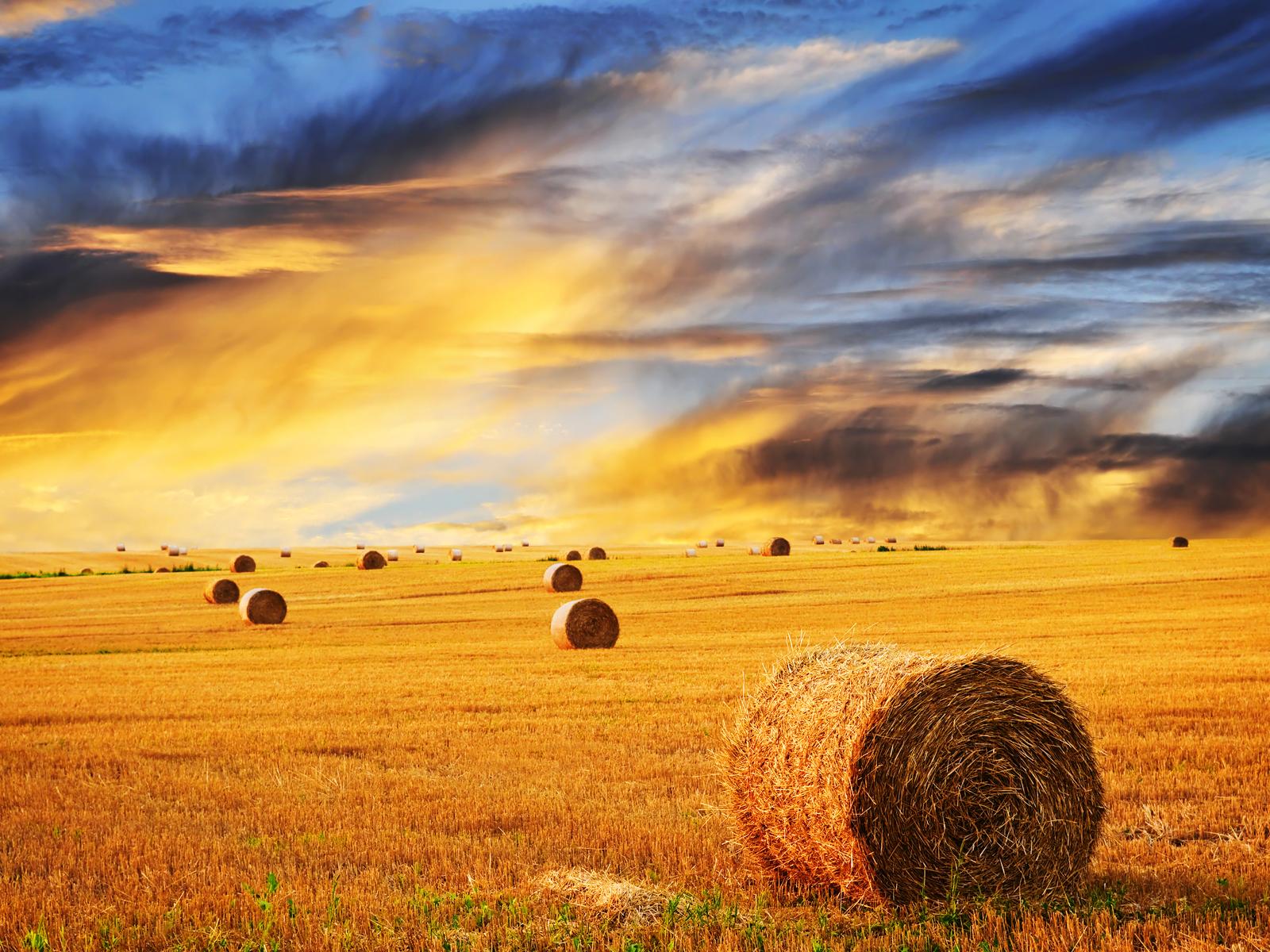 Farm Skyline Wheat wallpaper The Long Goodbye 1600x1200