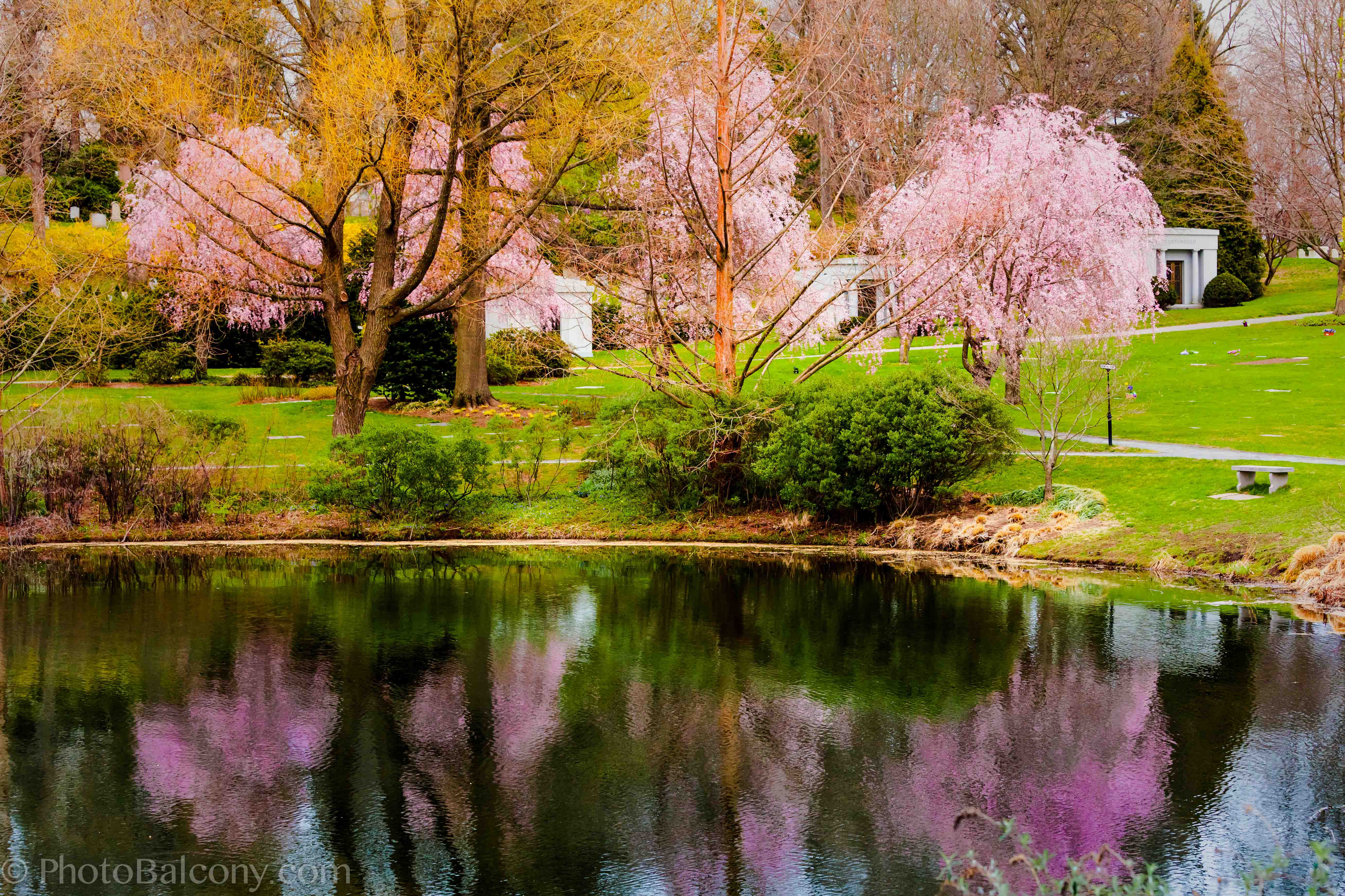 Free spring wallpaper with dogs wallpapersafari - Backgrounds springtime ...