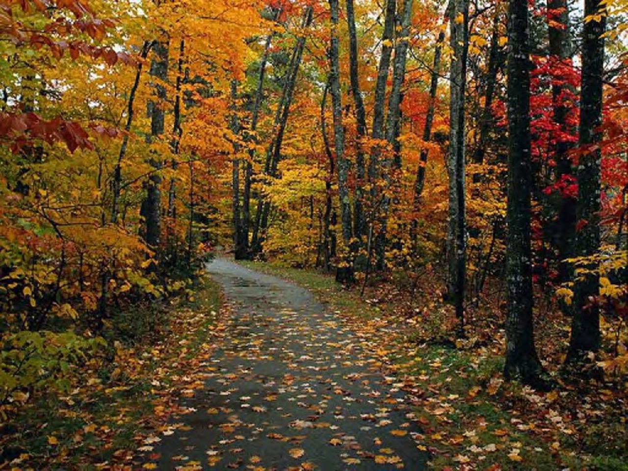 Country fall wallpaper wallpapersafari for Foto per desktop gratis autunno