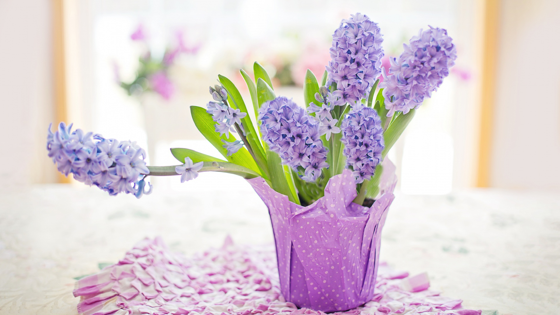 Easter Holiday 2020 Potted Hyacinths Home Download 1920x1080