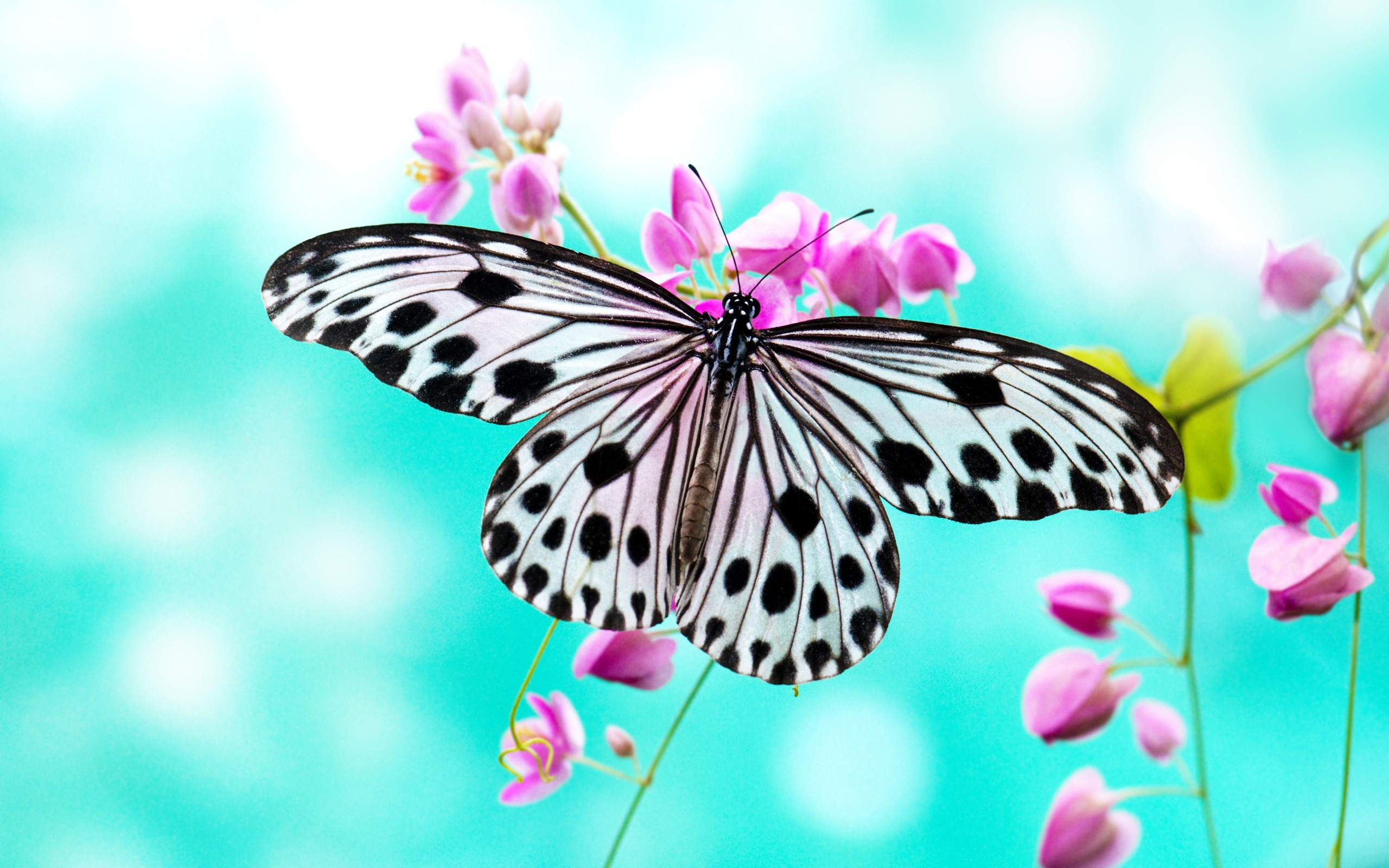 1515 Butterfly HD Wallpapers Background Images 2560x1600