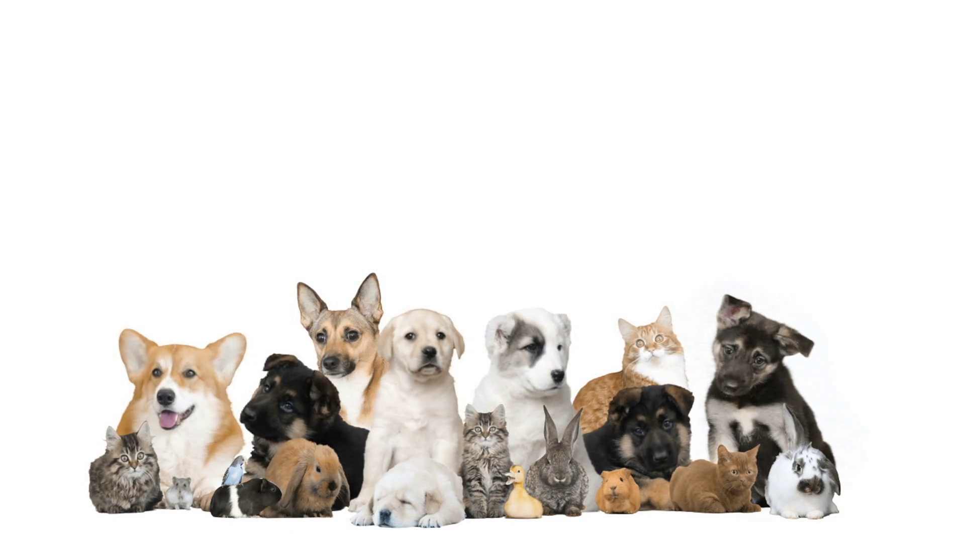Free download Pet Background 107 images in Collection Page ...