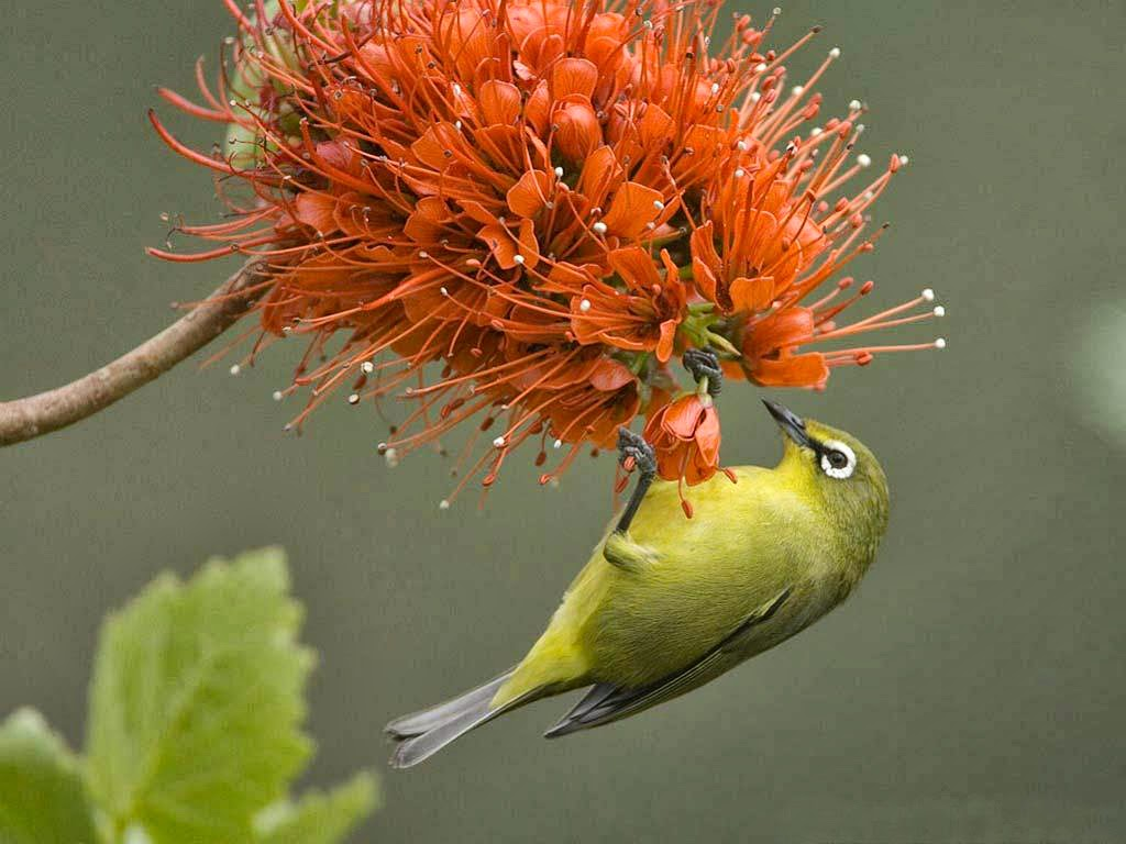 bird and flower wallpaper 1024x768