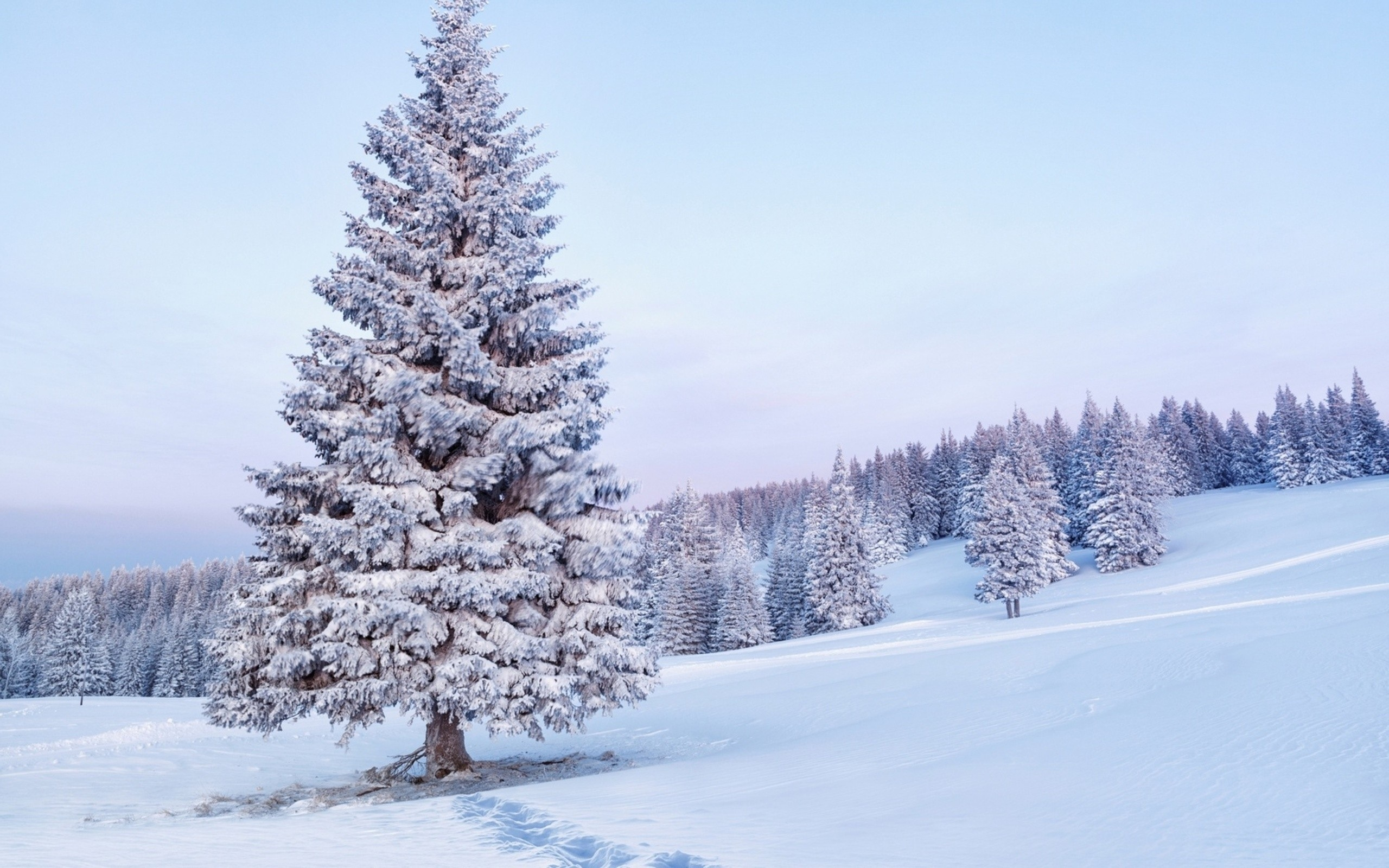 Snow Covered Tree   Wallpaper 40436 2560x1600