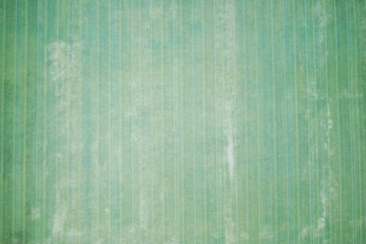 Can U Paint Over Wallpaper Glue 750x500