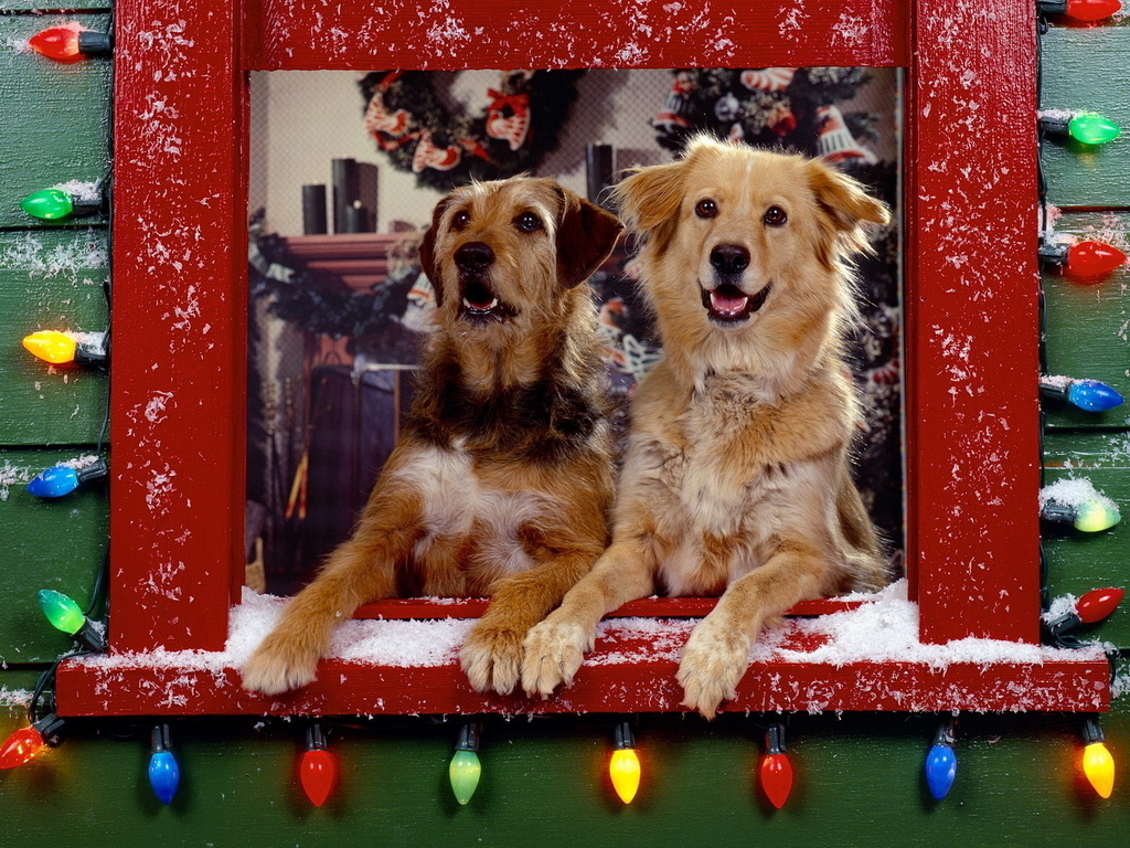 Christmas Christmas Doggies 1024x768