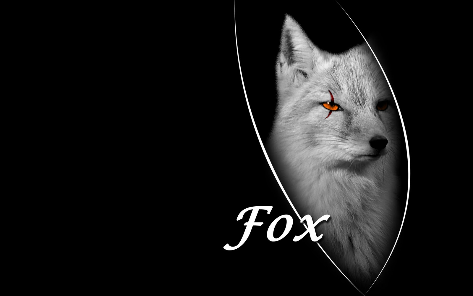 top desktop fox wallpapers hd fox wallpaper 24 black fox wallpaperjpg 1600x1000