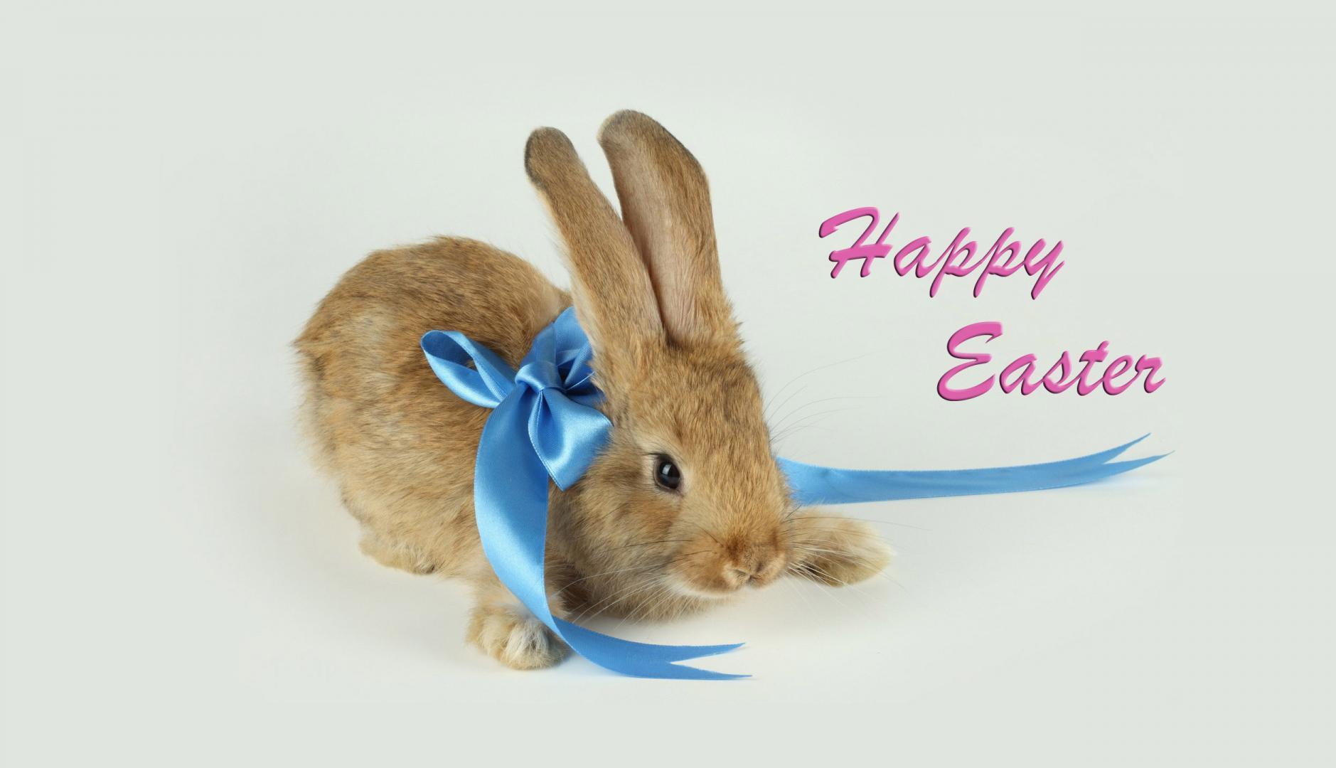 45 easter mobile wallpaper on wallpapersafari - Easter bunny wallpaper ...