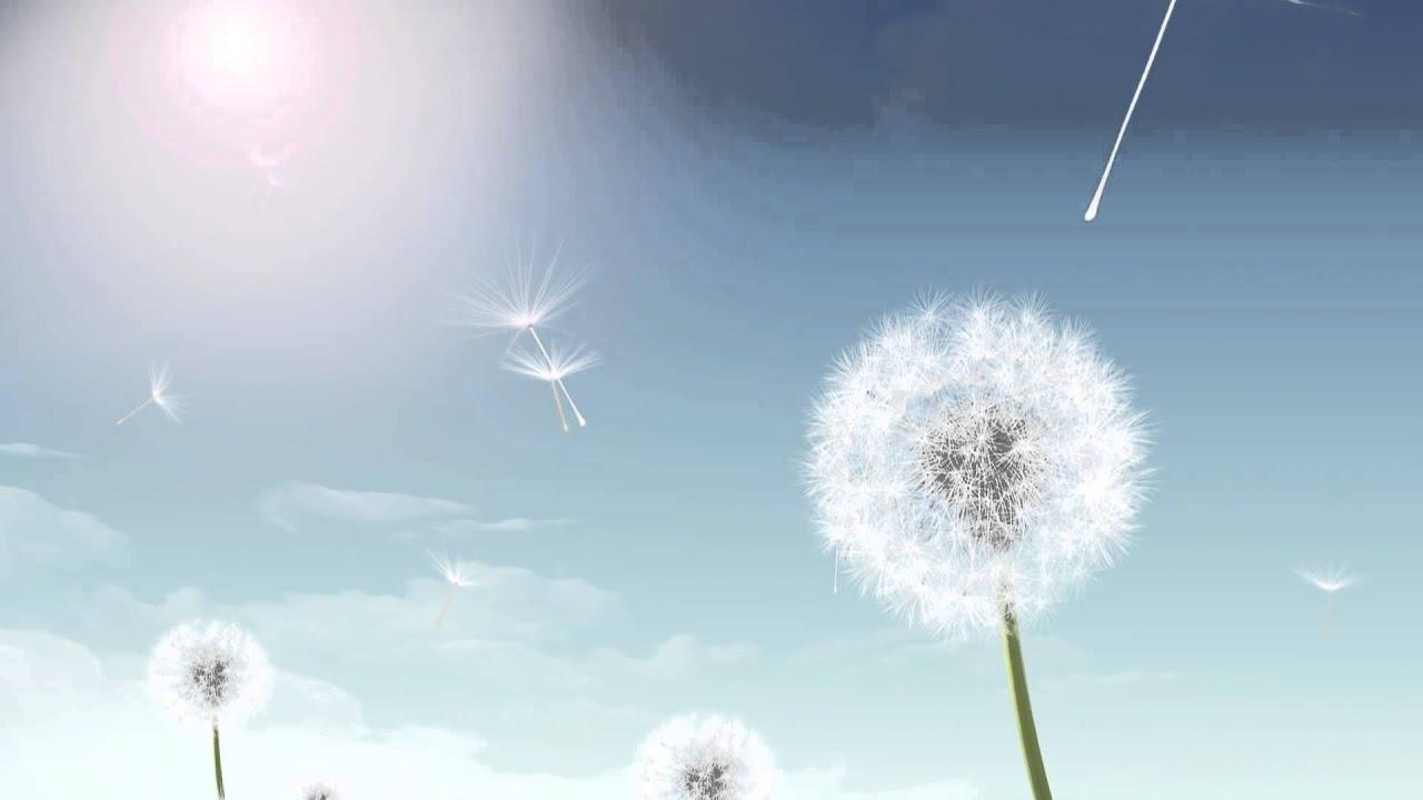 Background cu animado suave   Dente de leo 1280x720