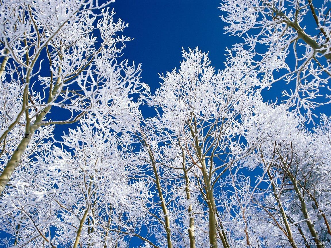 Winter Trees   Winter Wallpaper 509494 1152x864