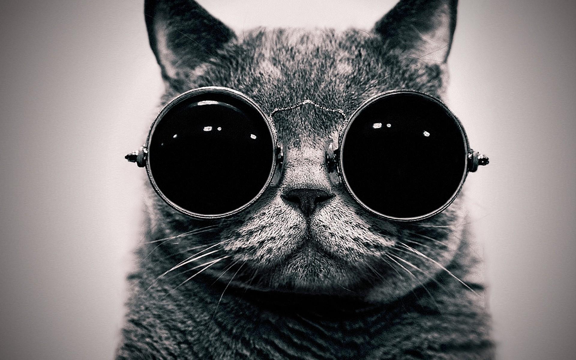 Cats animals glasses sunglasses hippie schrodingers cat monochrome 1920x1200