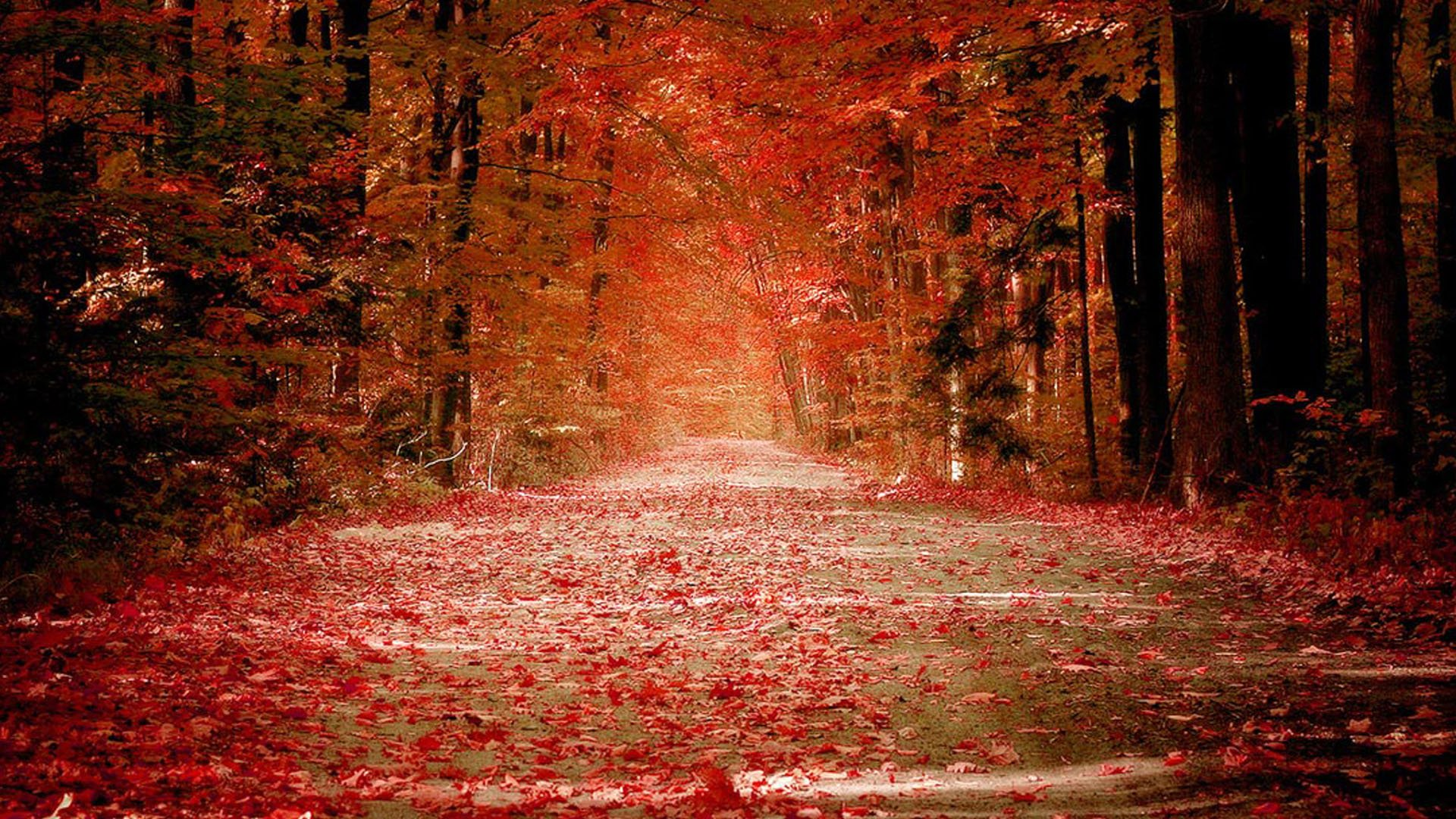 Autumn Nature Wallpapers HD Pictures One HD Wallpaper 1920x1080