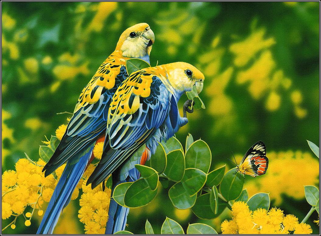 41 Hd Bird Wallpaper On Wallpapersafari