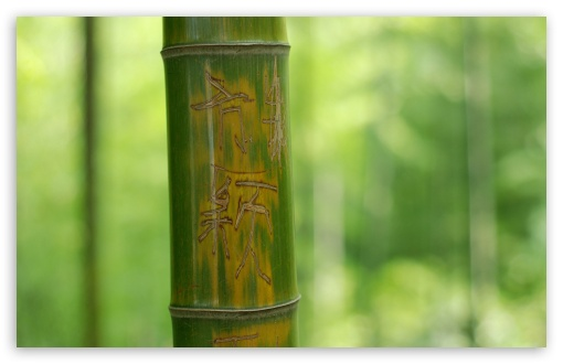 Feng Shui Bamboo Stick HD wallpaper for Standard 43 54 Fullscreen 510x330