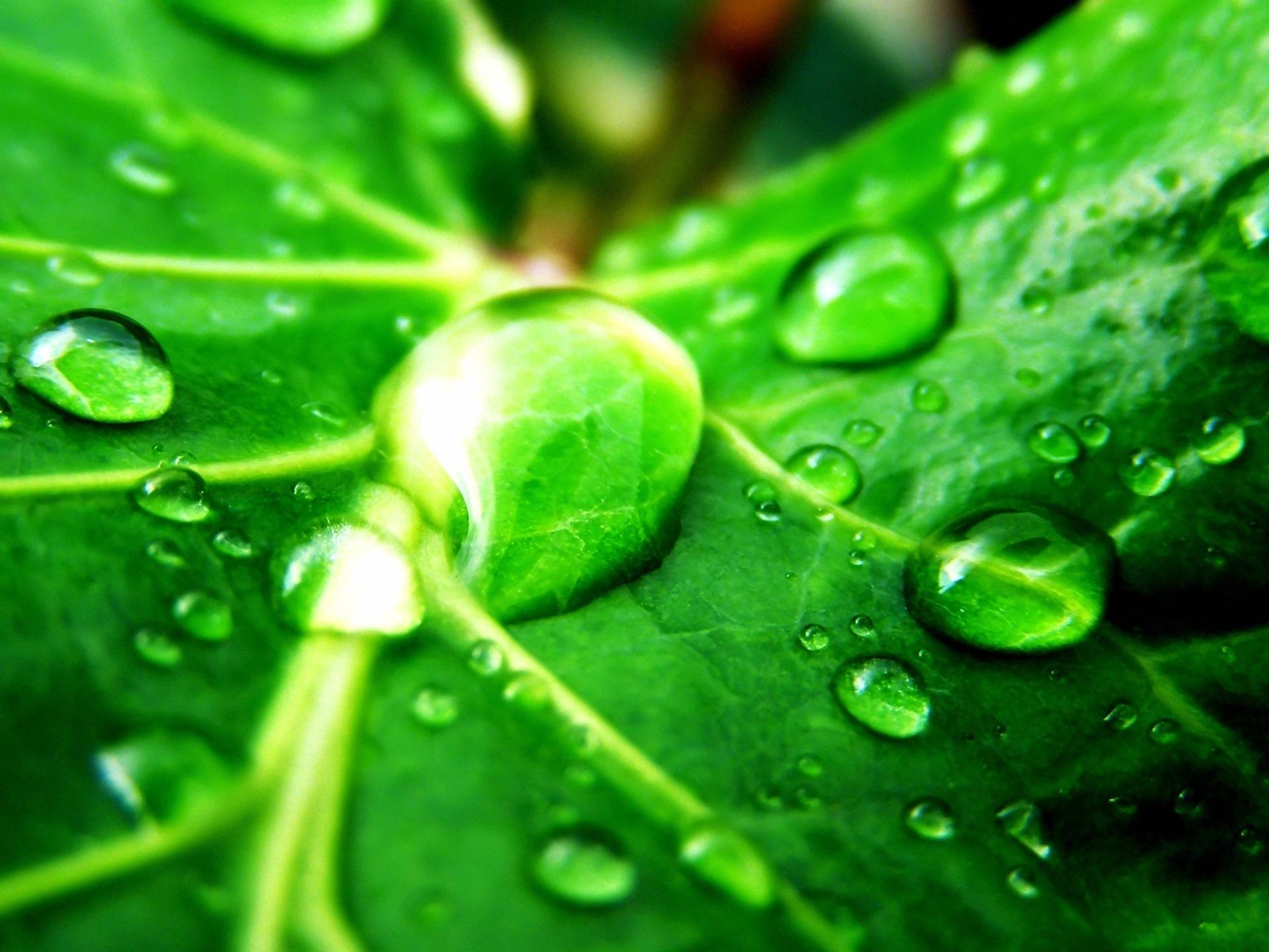 Download Green Nature Wallpaper Green Hd Wallpapers Green Nature