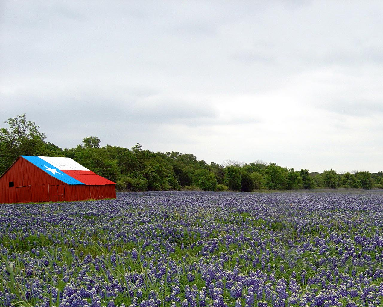Field Of Texas Paintbrush And Bluebonnets Inks Lake State Park ...