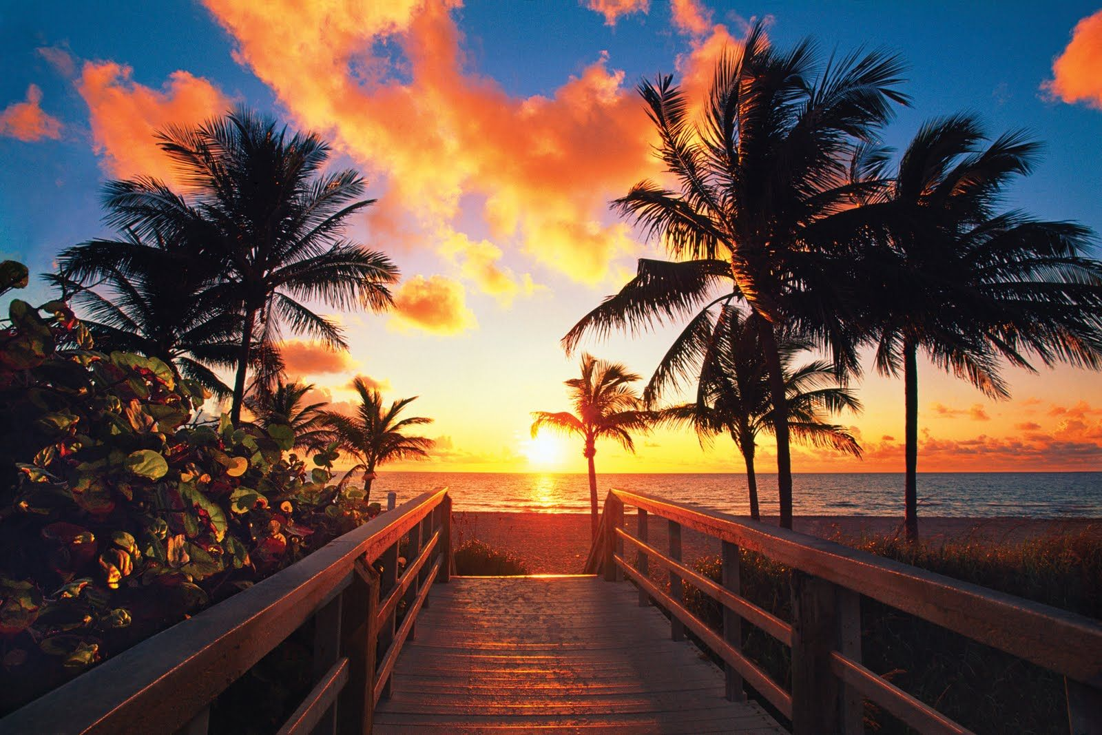 Tropical Sunrise Wallpaper Vorrei essere qui Hollywood beach 1600x1067