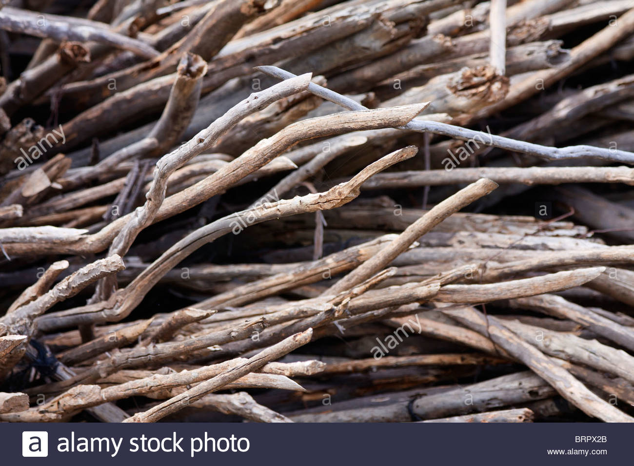 Pile of sticks and twigs dried and piled up haphazardly suitable 1300x956