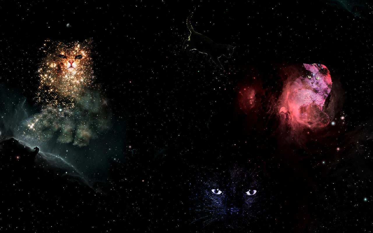 Kitten iphone wallpaper tumblr - Cats In Space Wallpaper Images Amp Pictures Findpik