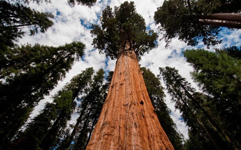sequoia national park sierra nevada california united states wallpaper 800x500