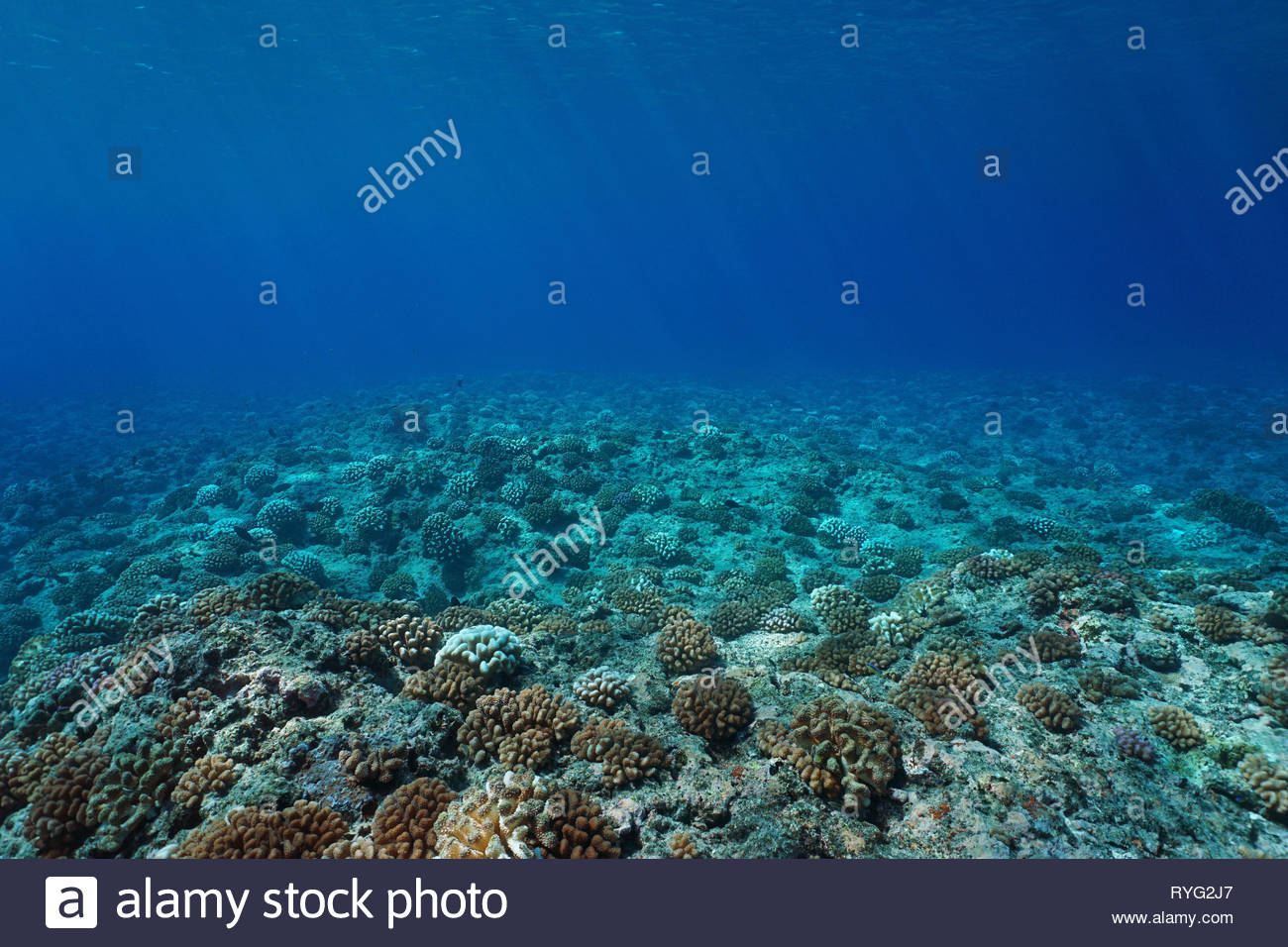 Seabed Background Stock Photos Seabed Background Stock Images 1300x956