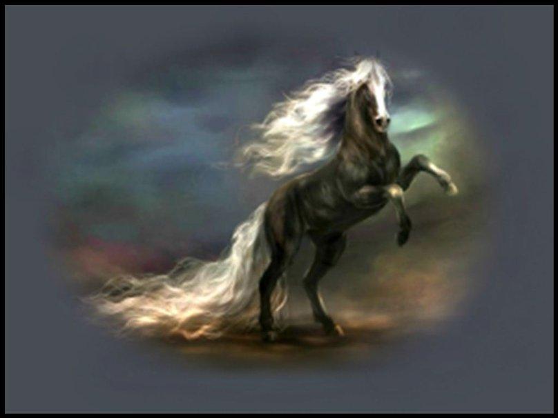 Beautiful horse wallpaper   ForWallpapercom 808x606