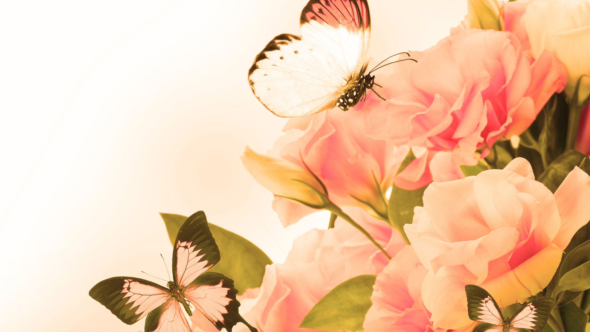 Vintage Art Wallpaper Vintage Rose And Butterfly Art 1920x1080