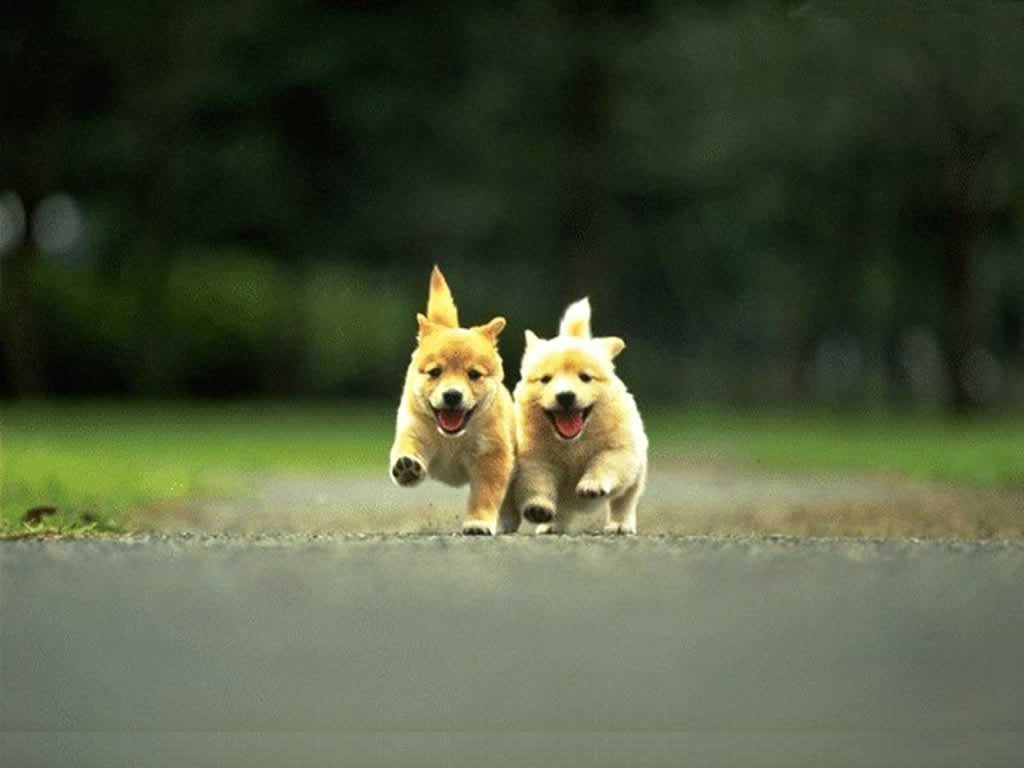 Free Download Wallpaper Download It Is Cute Puppy Wallpapers