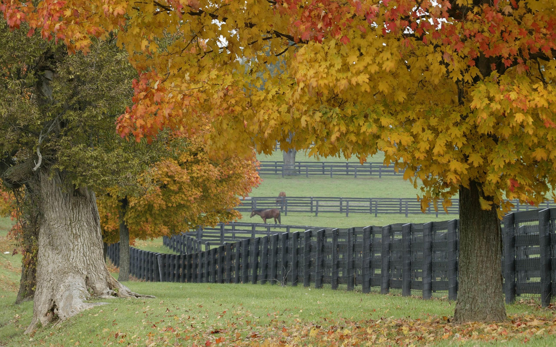 Farm Wallpaper 7020676 1920x1200