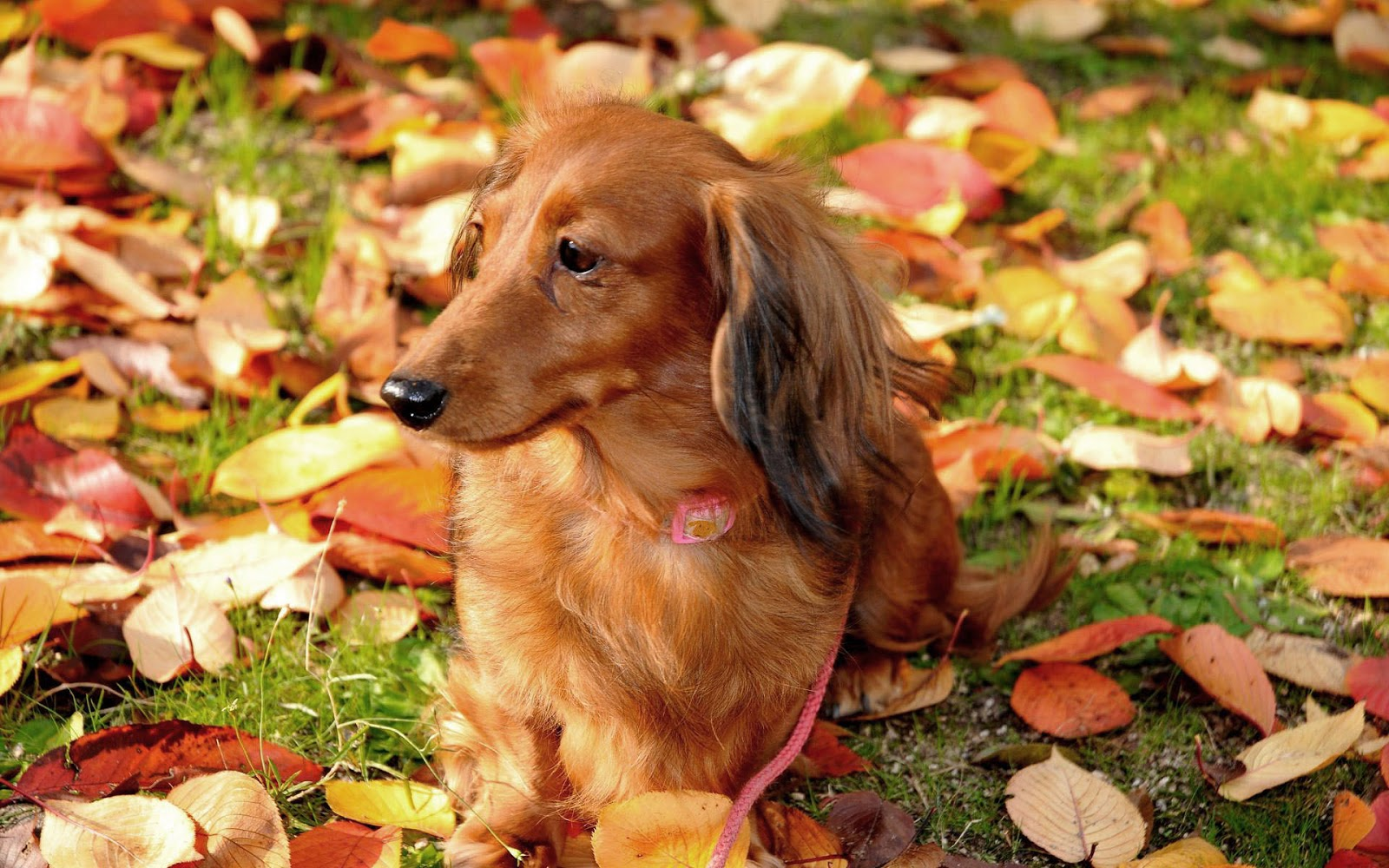 Fall Wallpaper With Dogs Images Pictures   Becuo 1600x1000