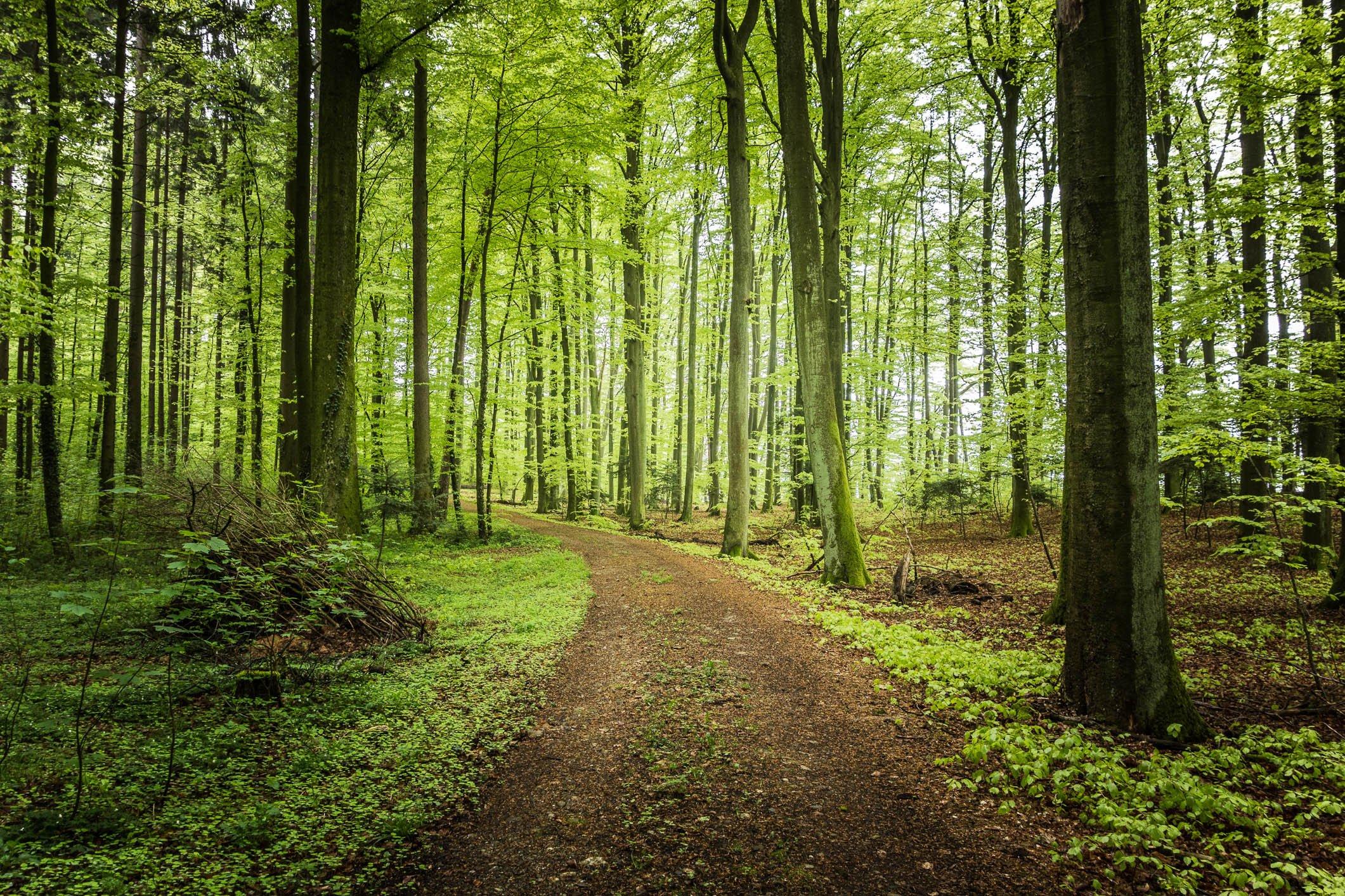 Wallpaper Trees Forest - WallpaperSafari