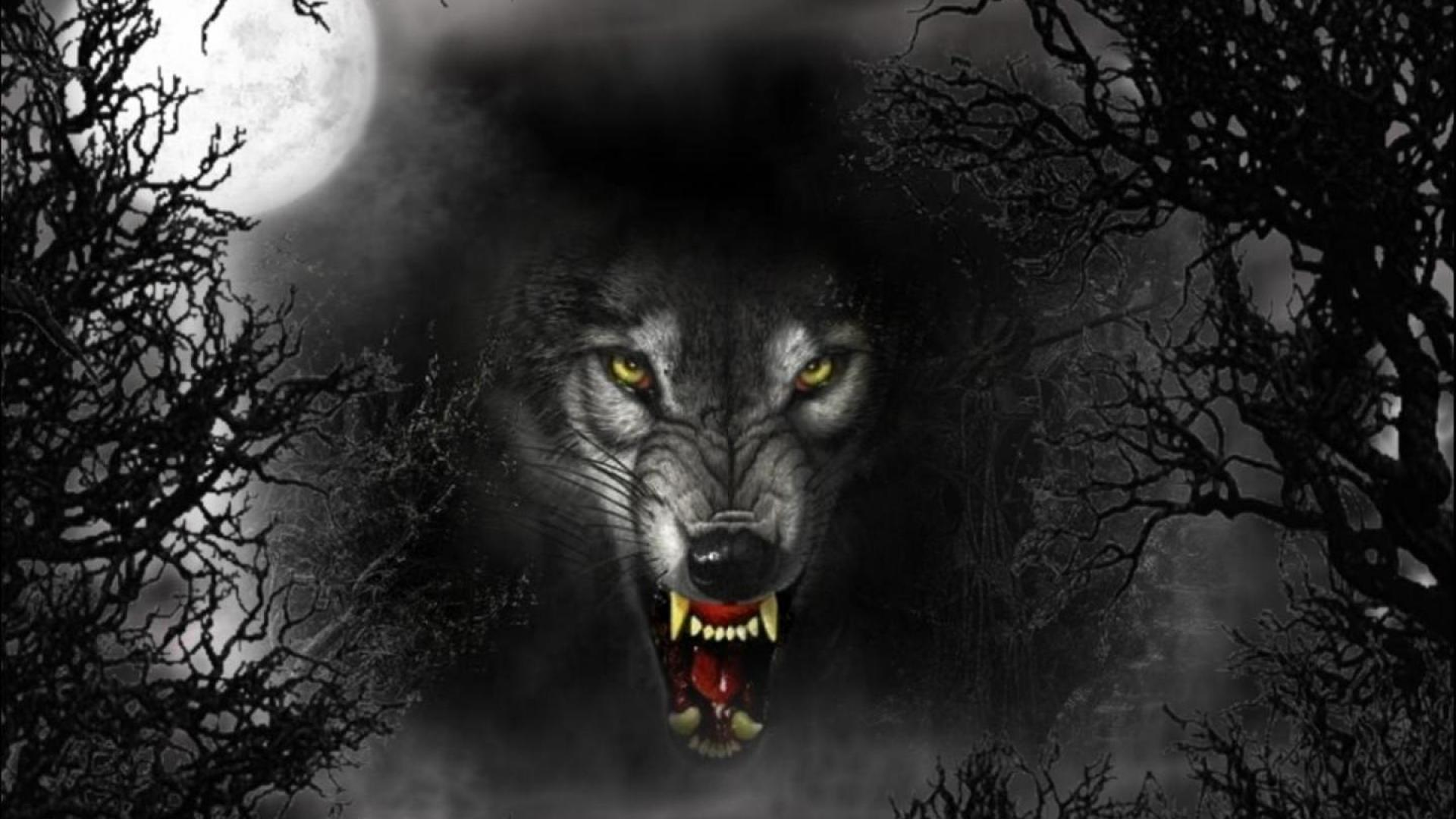 desktop full moon wolf wallpaper wallpaper 1920x1080