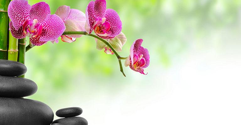 zen flowers detailjpg 768x399