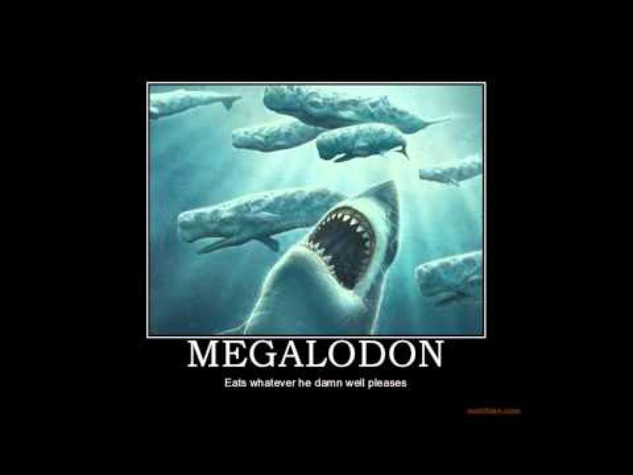 Megalodon Wallpaper HD - WallpaperSafari