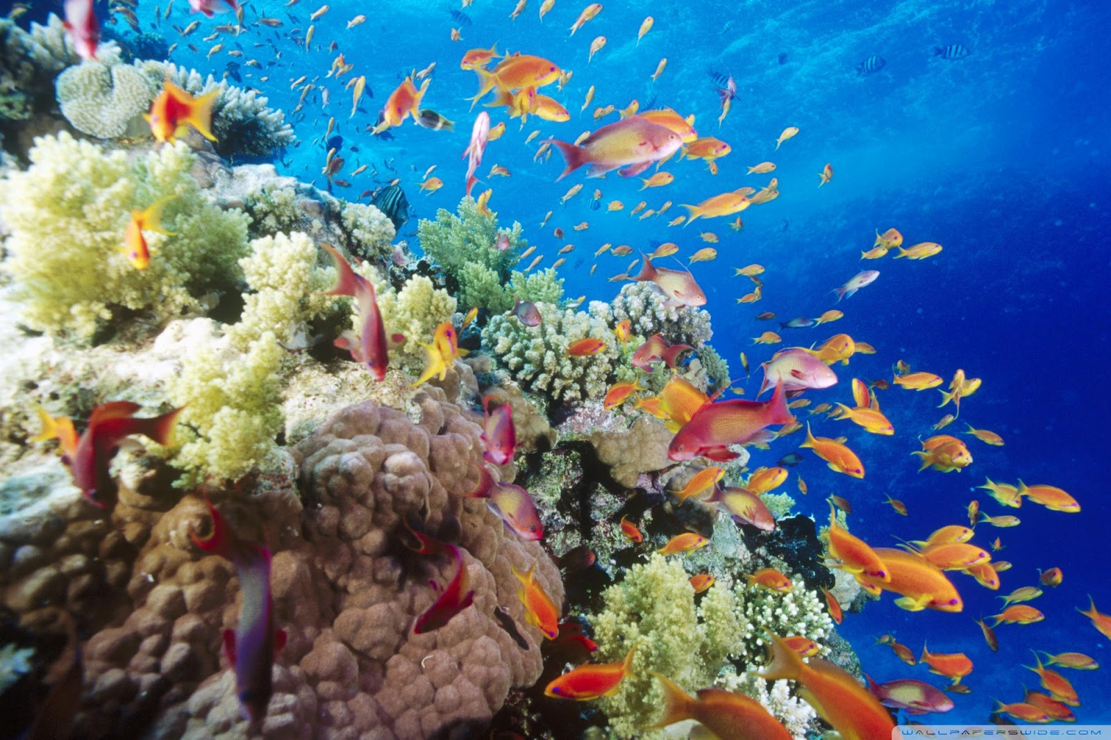 Coral Reef wallpapers christianhdwallpaper 1600x1066