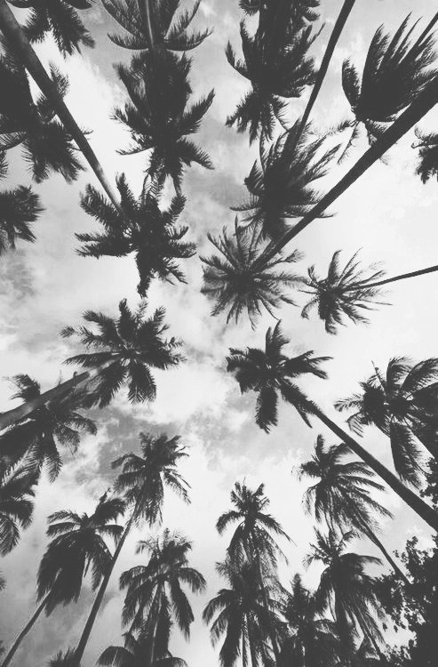 palm trees backgrounds Tumblr 493x750