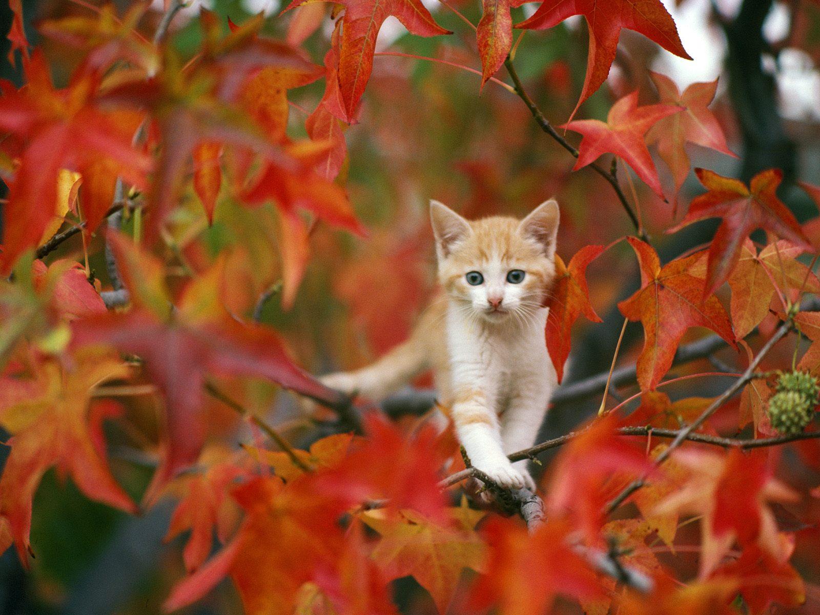 Cats   Cats Wallpaper 28572028 1600x1200