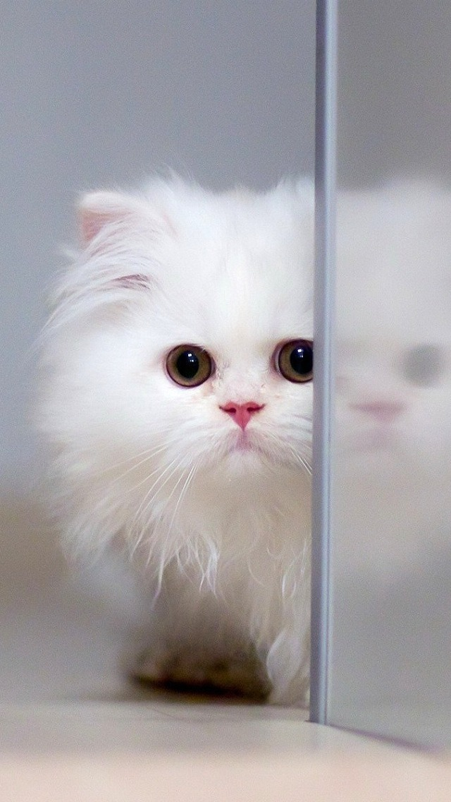 74 White Cats Wallpapers On Wallpapersafari