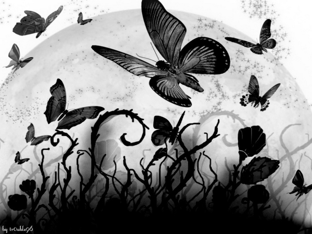 Free Download Black Butterfly Hd Wallpaper 1024x768 For