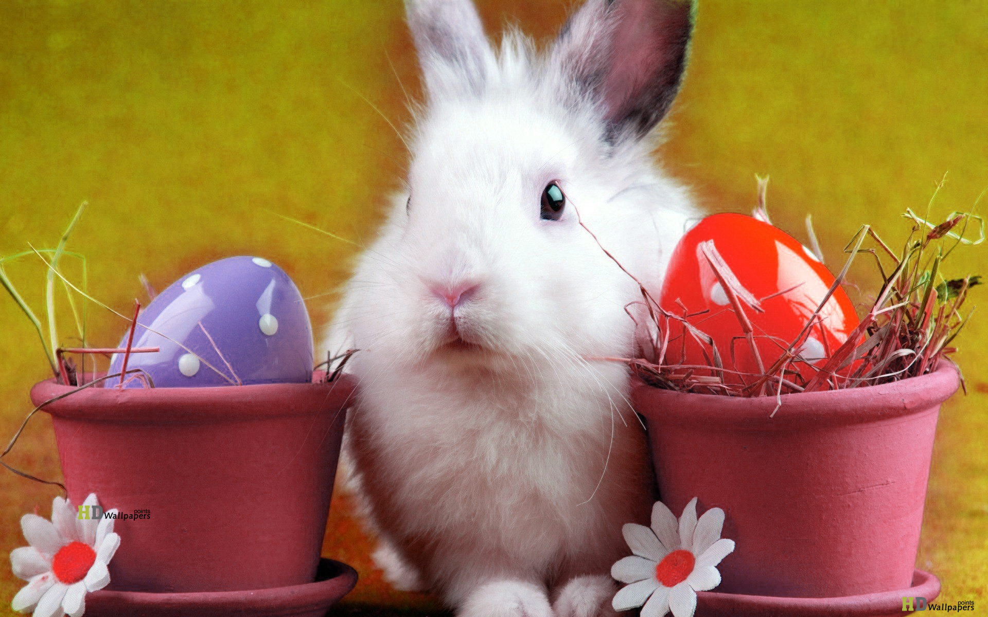 Easter bunny desktop Wallpaper 2014 Happy Easter Bunny wallpaper for 1920x1200