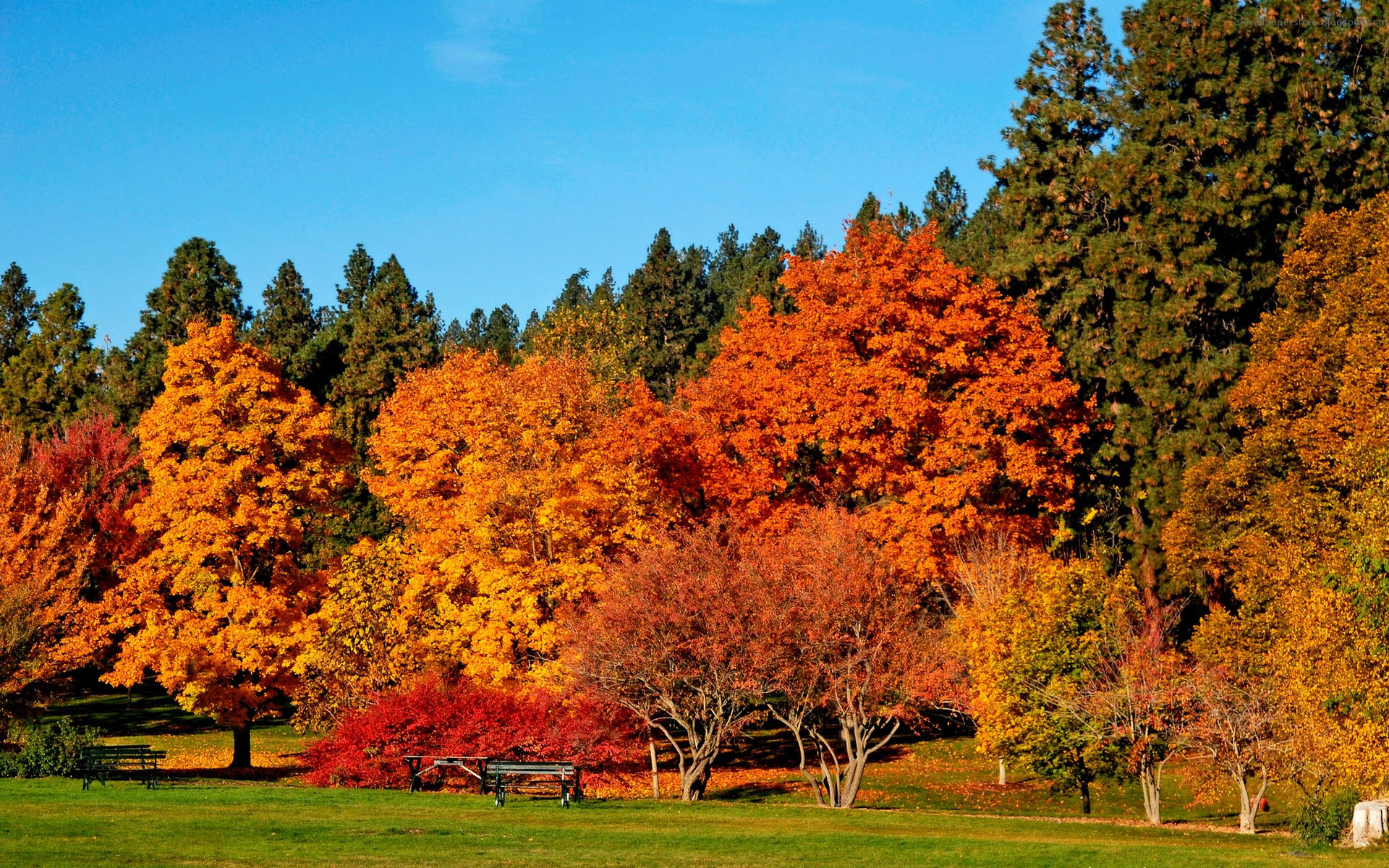 Download Autumn Colors Wallpaper | Free Wallpapers