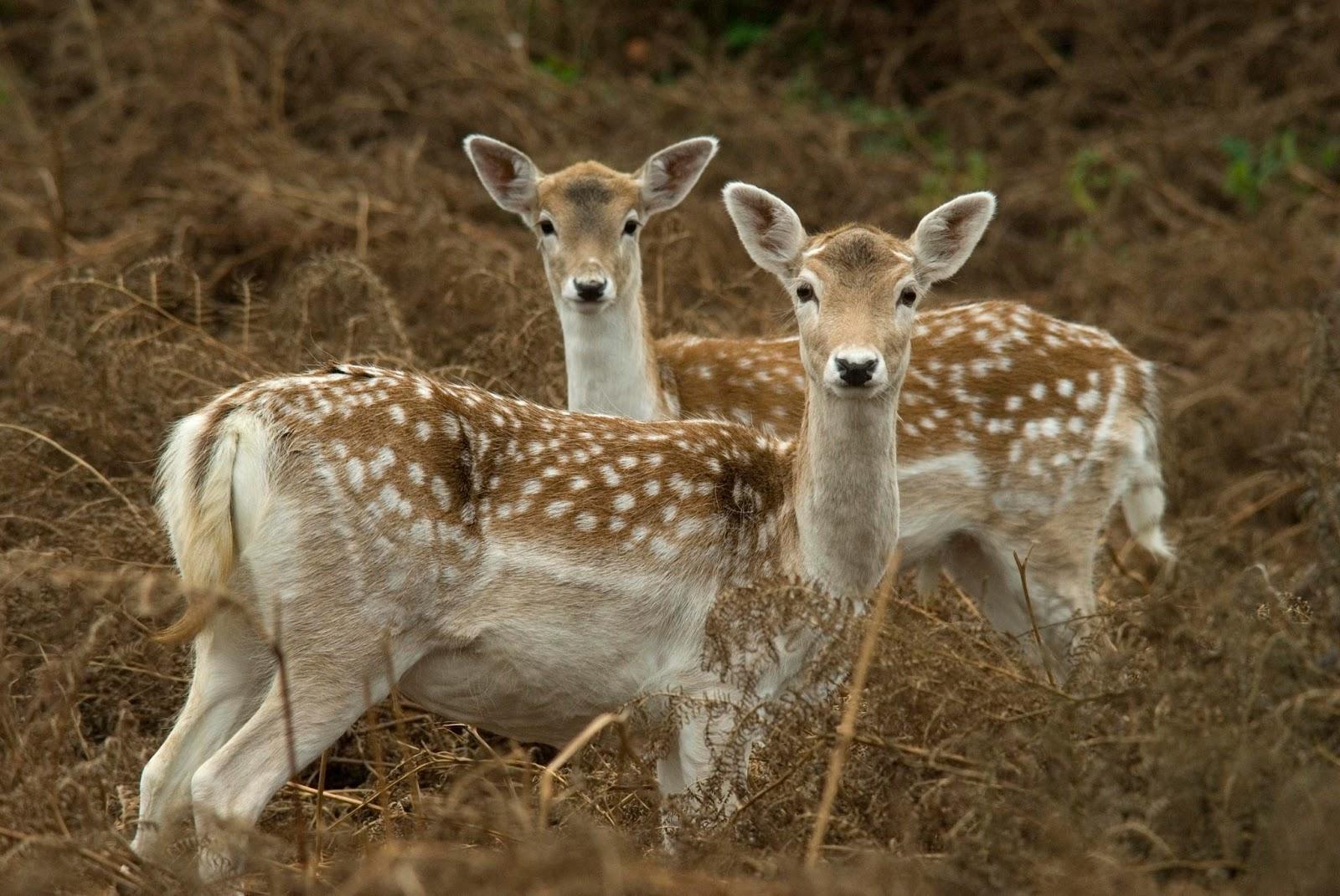 deer wallpaper 1600x1071