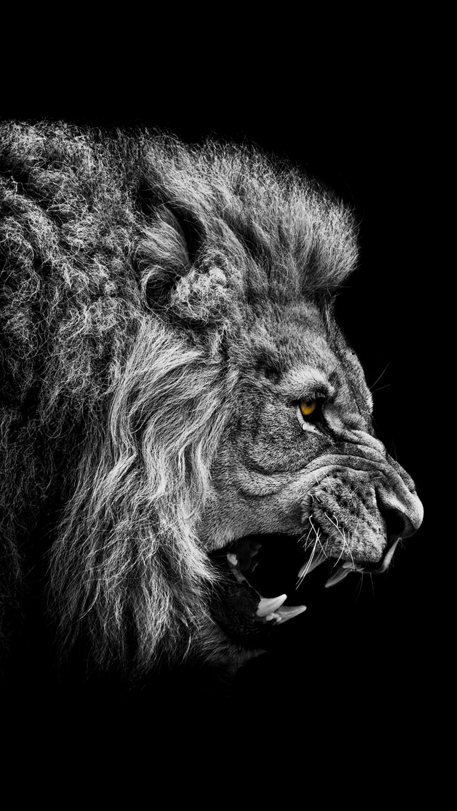 Angry Lion iPhone Wallpaper 640x1136