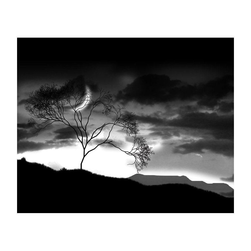 MD3062 Black and White Twilight Dark Removable Full Wall Wallpaper 1000x1000