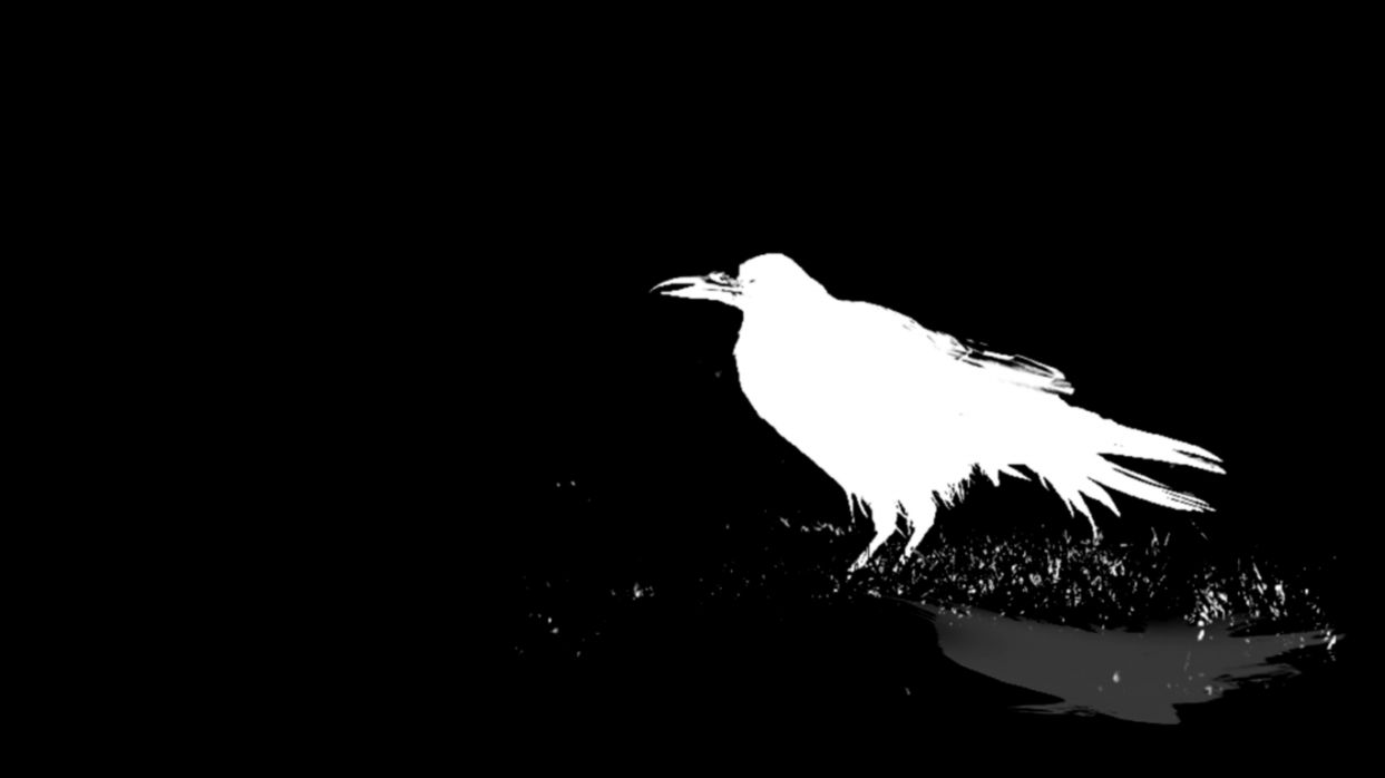 Black Bird Raven Hd Wallpaper Format Wallpapers 1243x698