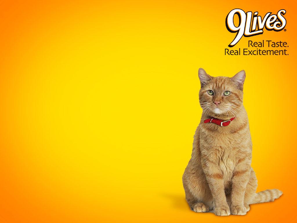 KapanLagicom Wallpaper   Morris The Cat 1024x768