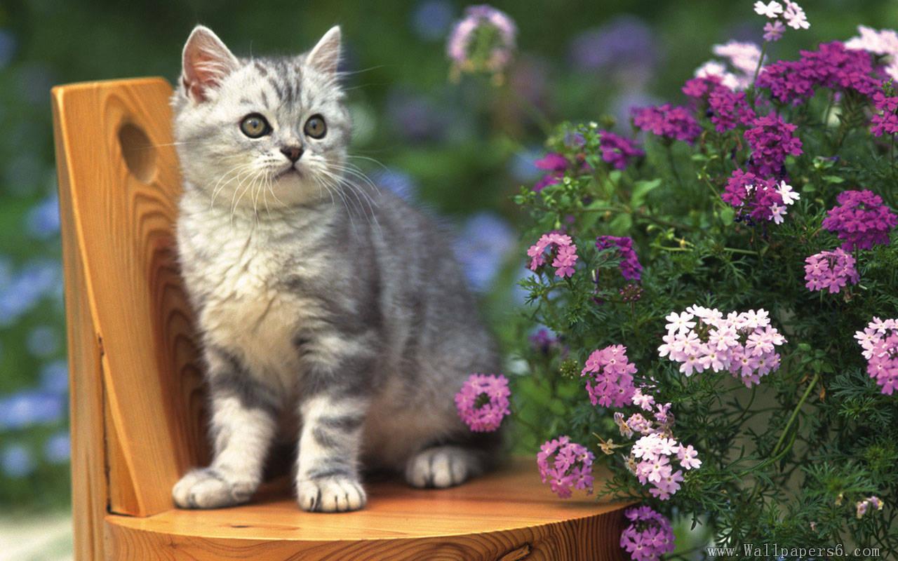 Кошки в цветах обои а рабочий стол